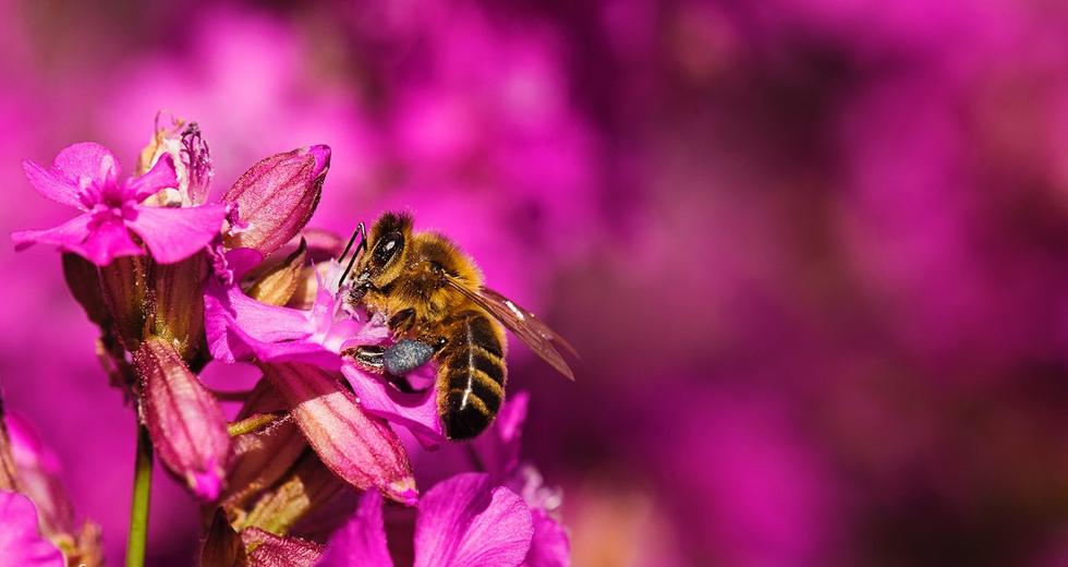 Baviera, oltre un milione e mezzo di cittadini chiede un referendum per salvare le api