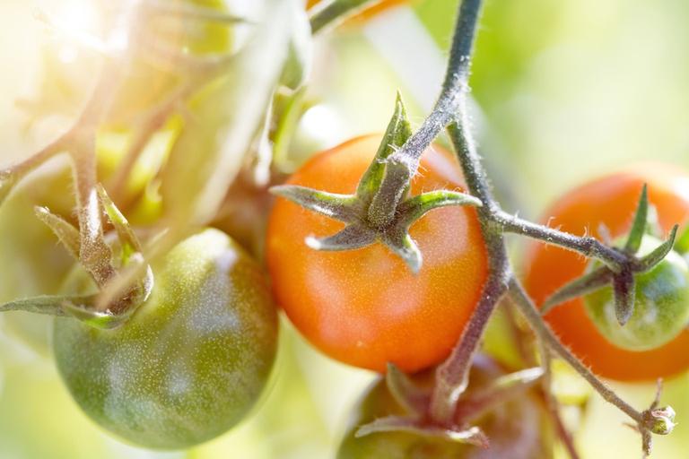 Pomodori dal campo al supermercato, spesa