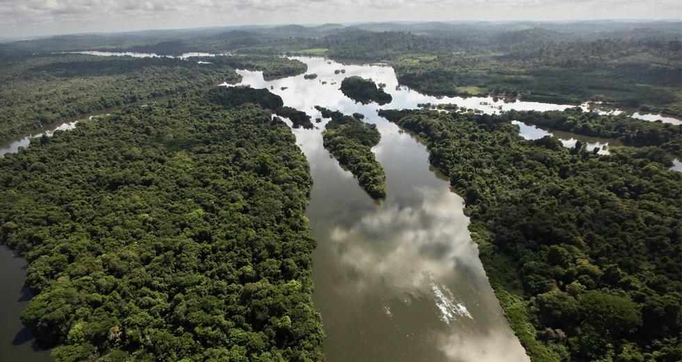 Il valore economico delle foreste è inestimabile, per tutti noi