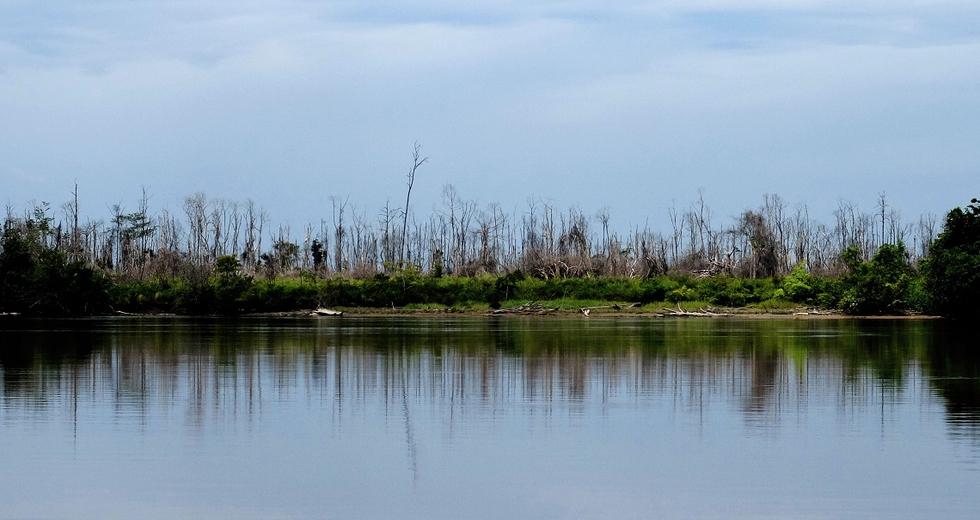 La distruzione dell'ambiente è un crimine contro l'umanità