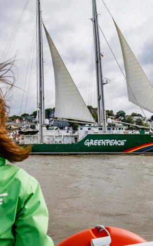 7 vittorie di Greenpeace che hanno fatto la storia