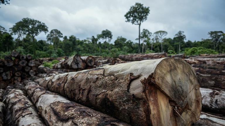 Legname tagliato illegalmente dall'Amazzonia brasiliana