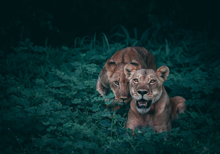 endangered species, kenya