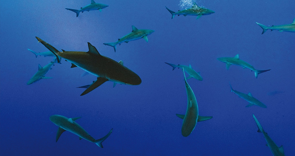 La pesca industriale invade gli habitat degli squali, lasciandoli senza rifugi sicuri