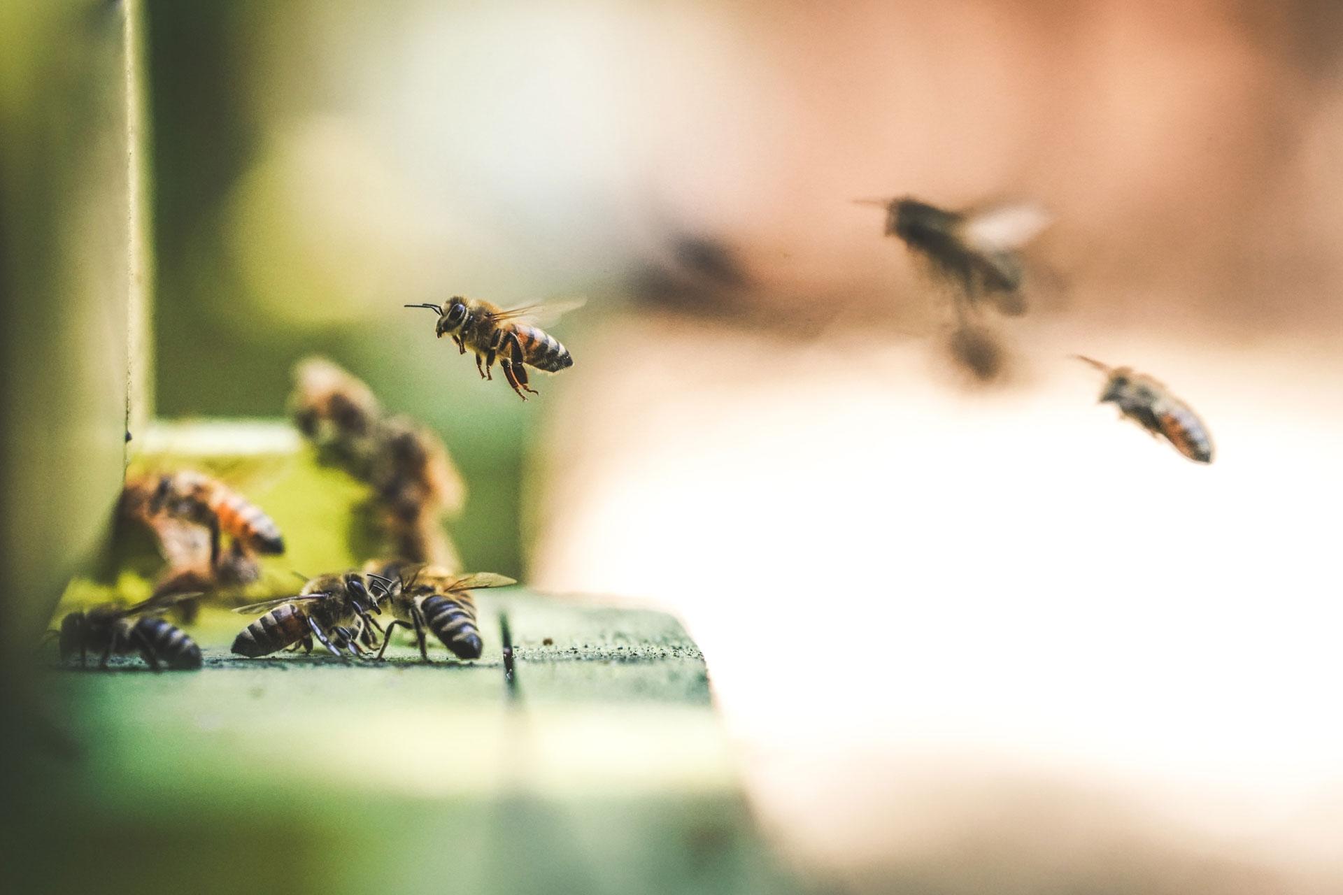 Bee my Future