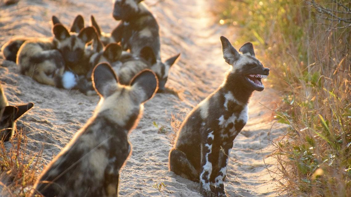 Le foto di animali più divertenti del 2017 premiate dal Comedy wildlife photography awards