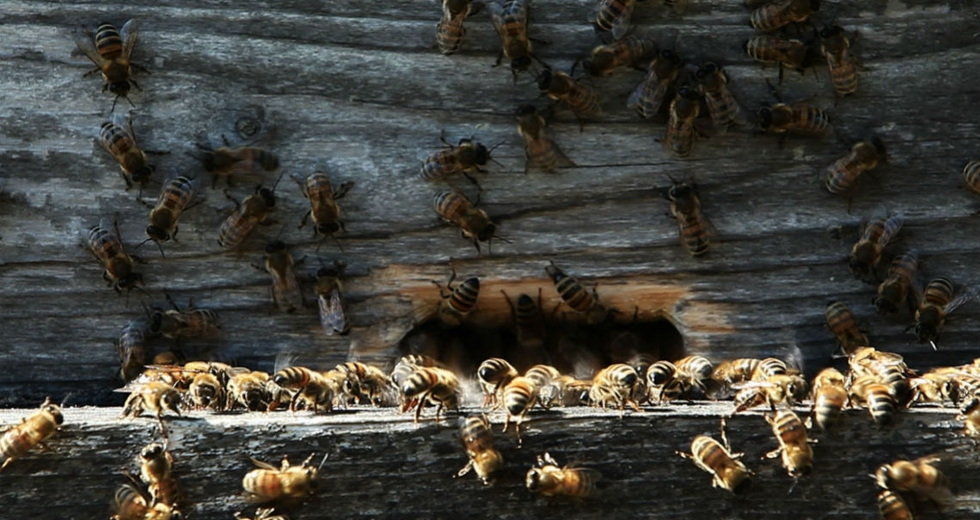 Il tempo delle api. Un crowdfunding per il documentario che racconta l'apicoltura naturale