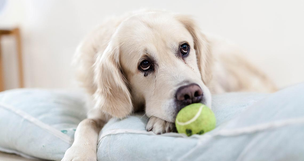 Parassiti intestinali nel cane, come sconfiggerli naturalmente