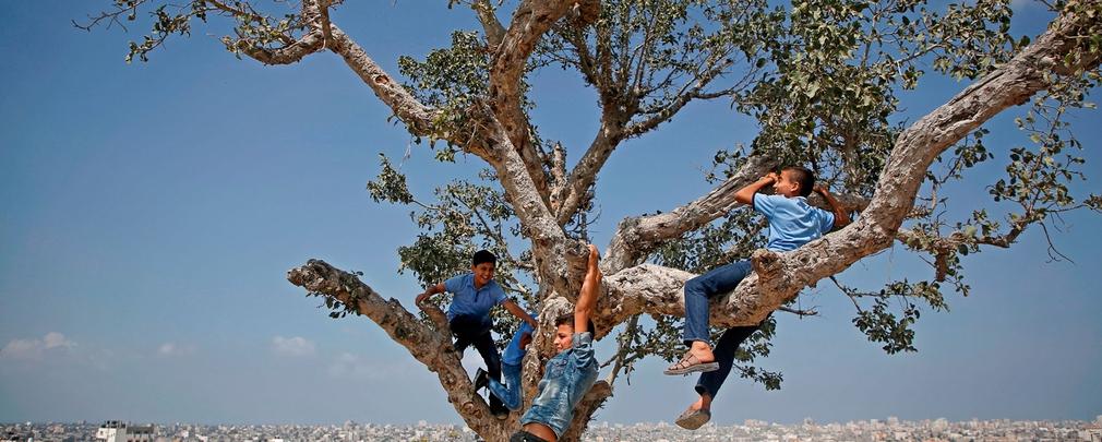Il 3 marzo è la Giornata mondiale della natura: per guarirci, le foreste sono la cura