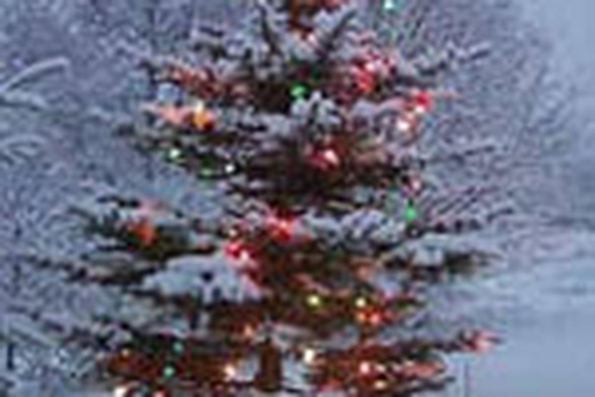 Albero Di Natale Yule.Abete L Albero Di Yule Lifegate
