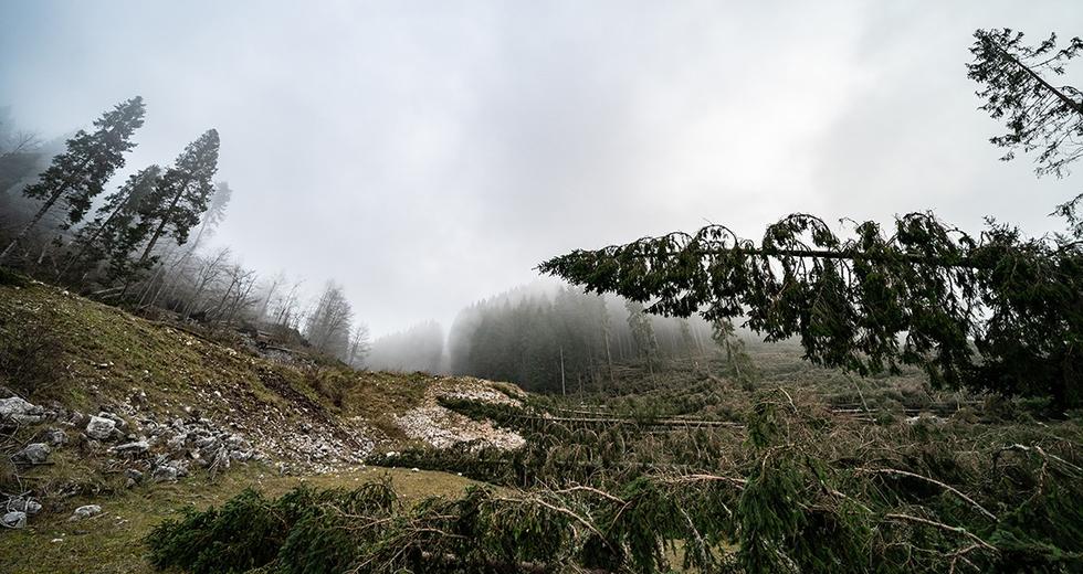 Cop 26 del 2020 in Italia, lo chiedono gli italiani. Per un governo in prima linea contro i cambiamenti climatici