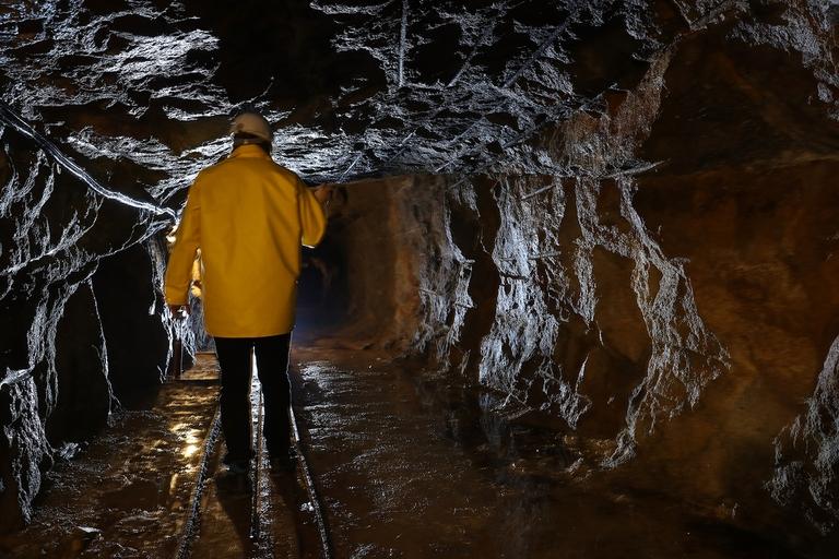 Nevada, si valuta di rinunciare a una miniera di litio per salvare una pianta rara
